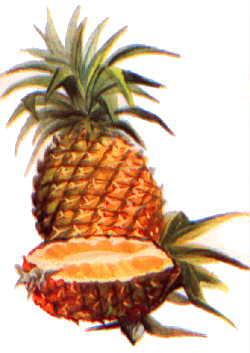Premier essais d 39 un blog culture 39 blog original - Comment pousse l ananas ...